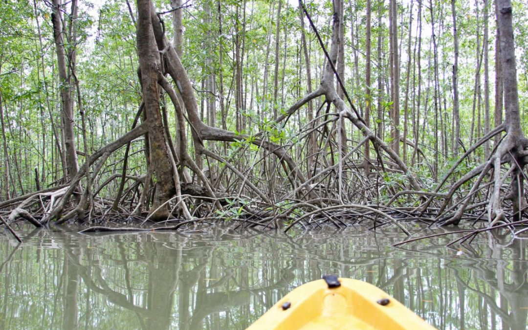 Kayaking the Isla Damas Mangroves