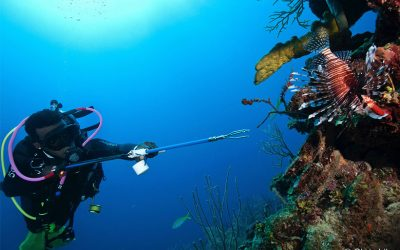 Facts About The Mesoamerican Reef in Belize